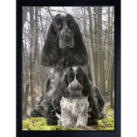 COCKER SPANIEL BLUE ROAN 3D FRIDGE MAGNET